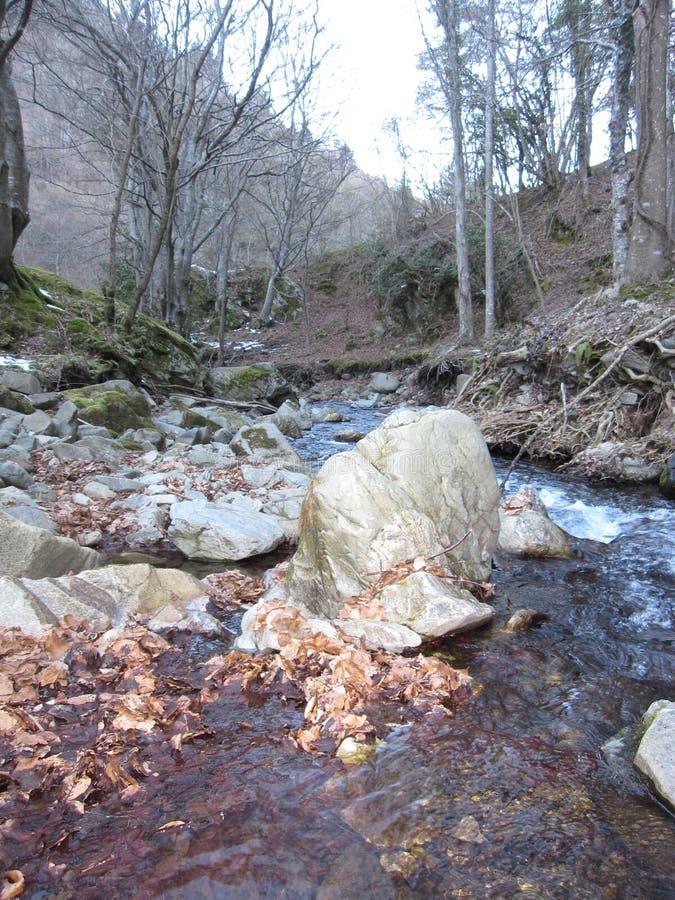 Πέτρα και δέντρα φύσης ποταμών στοκ φωτογραφία με δικαίωμα ελεύθερης χρήσης