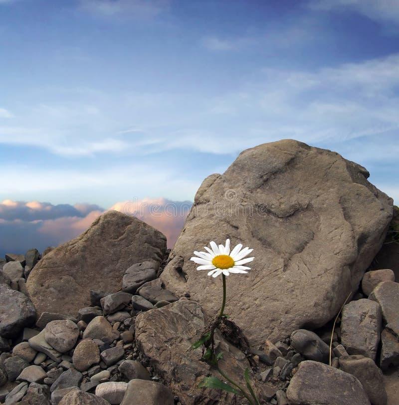 πέτρα καρδιών στοκ εικόνες με δικαίωμα ελεύθερης χρήσης