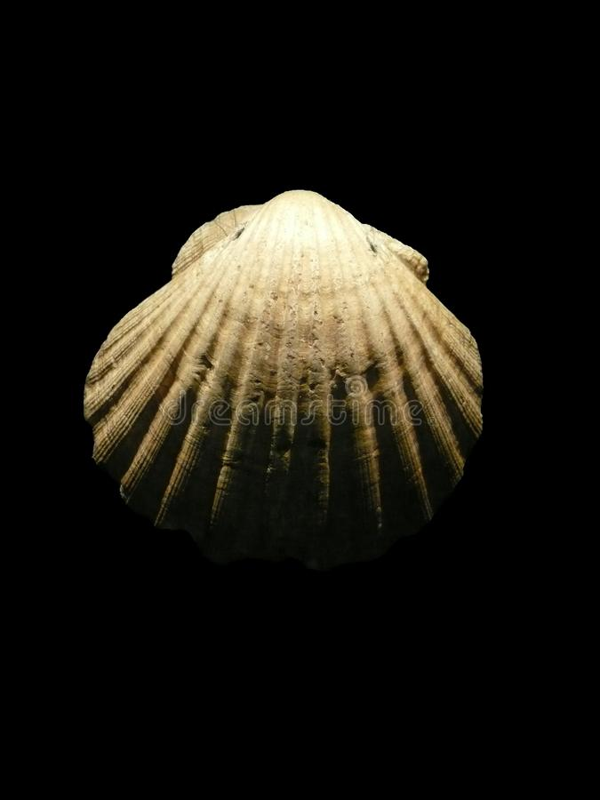 πέτρα οστράκων στοκ φωτογραφία με δικαίωμα ελεύθερης χρήσης