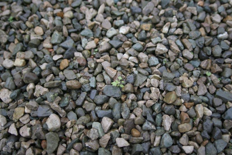 πέτρες ζωής στοκ φωτογραφίες με δικαίωμα ελεύθερης χρήσης