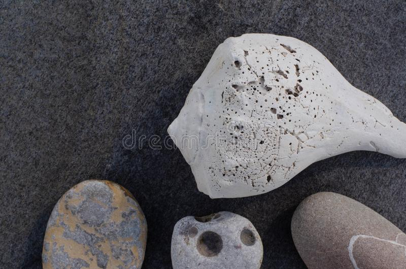 Πέτρες θαλασσινών κοχυλιών και παραλιών στον γκρίζο βράχο στοκ φωτογραφίες