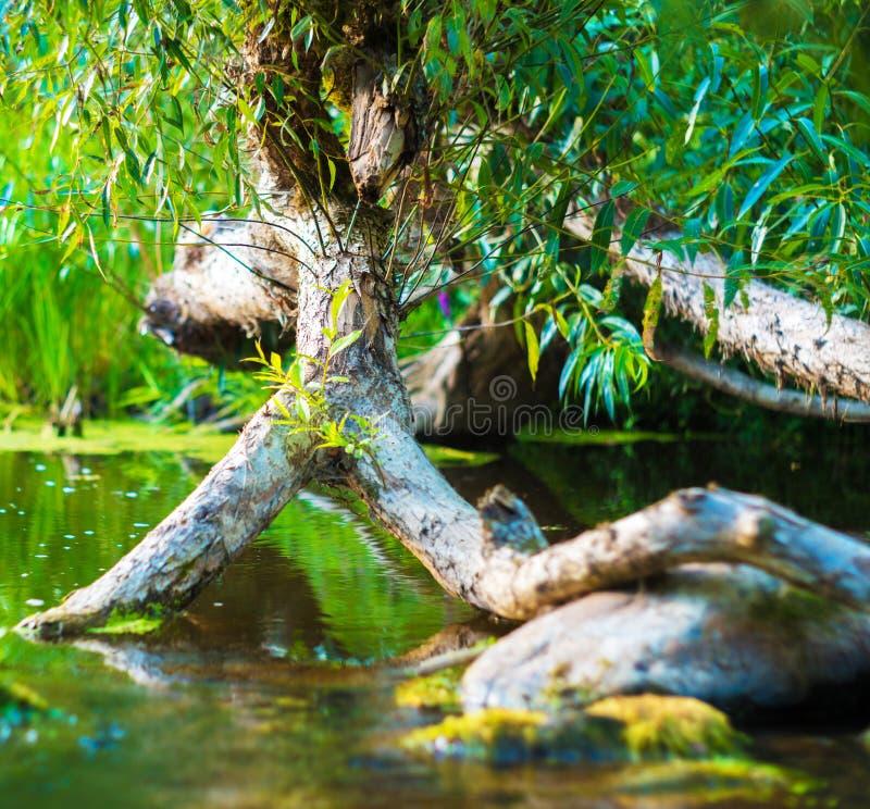 Πέτρες και δέντρο στο νερό στοκ φωτογραφίες με δικαίωμα ελεύθερης χρήσης