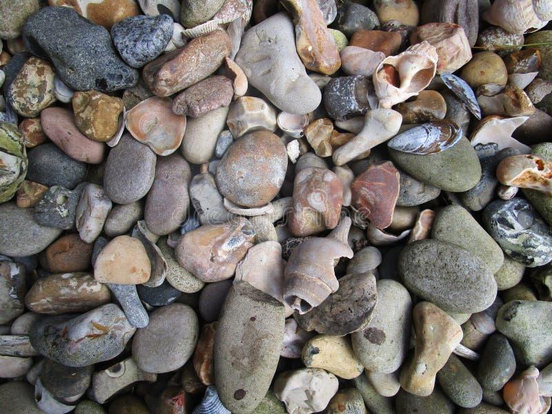 Πέτρες και κοχύλια στοκ φωτογραφία