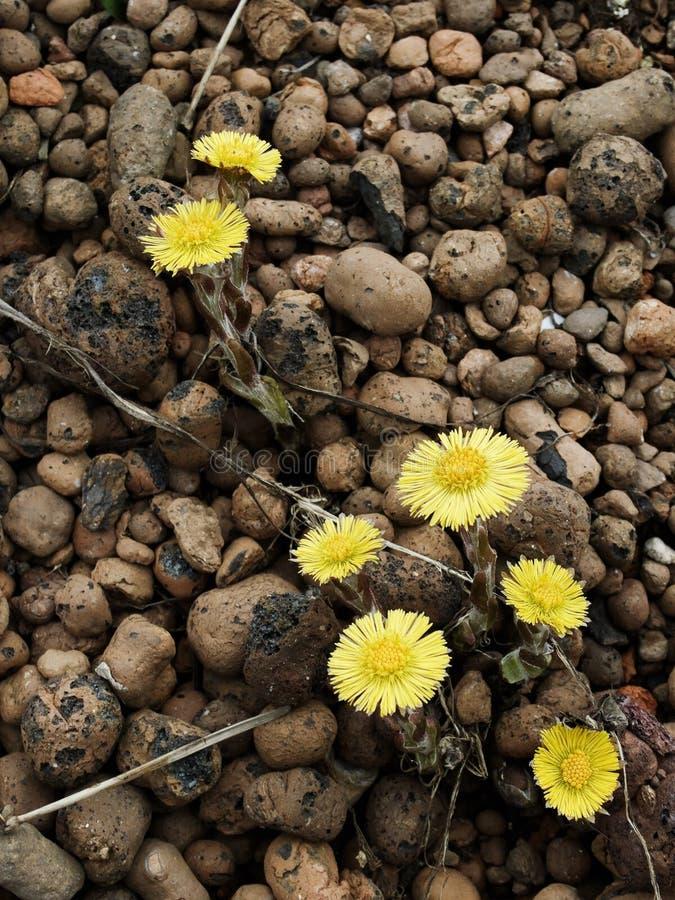 πέτρες λουλουδιών στοκ εικόνες με δικαίωμα ελεύθερης χρήσης