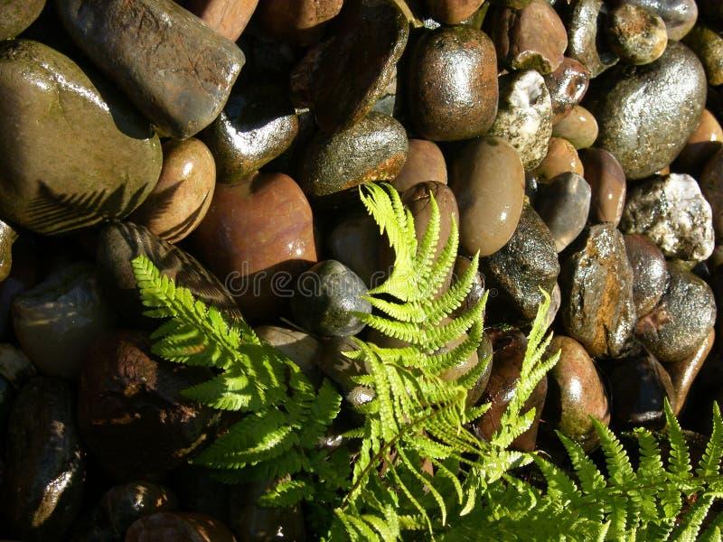 πέτρες υγρές στοκ φωτογραφία με δικαίωμα ελεύθερης χρήσης