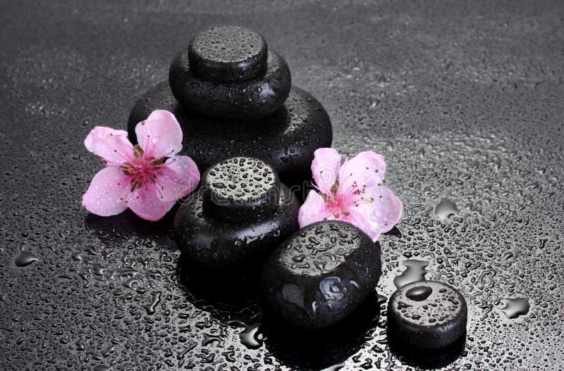 Πέτρες SPA με τις απελευθερώσεις και τα ρόδινα λουλούδια sakura στοκ φωτογραφίες με δικαίωμα ελεύθερης χρήσης