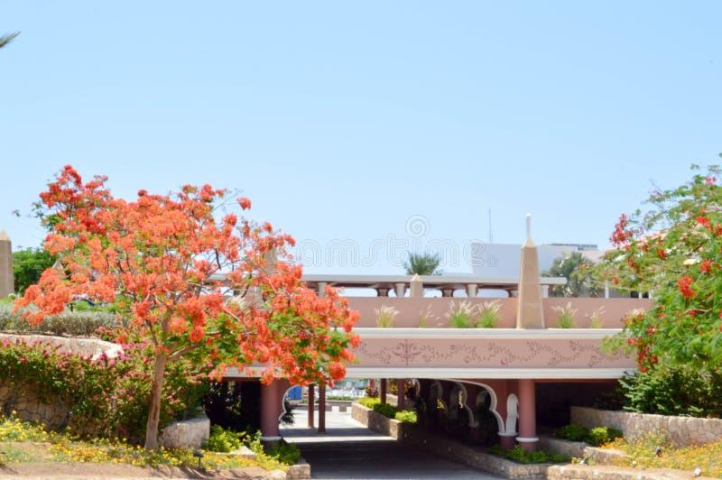 Πέτρινη γέφυρα, τοπίο, βλάστηση, προστατευόμενο δέντρο Delonix με τα κόκκινα ανθίζοντας λουλούδια, φοίνικας με τα πράσινα φύλλα σ στοκ εικόνες με δικαίωμα ελεύθερης χρήσης