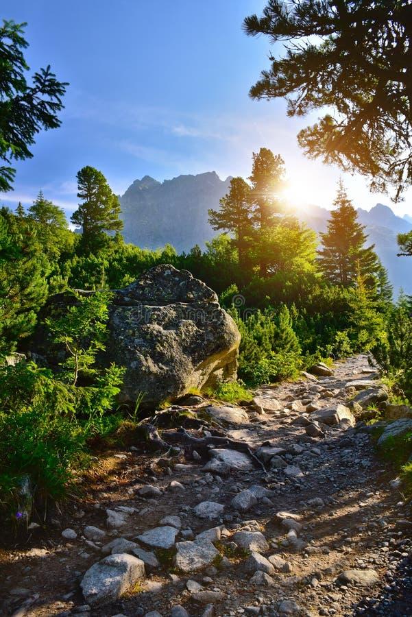 Πέτρινη πορεία στη δασική ανατολή βουνών Tatra στοκ φωτογραφία με δικαίωμα ελεύθερης χρήσης