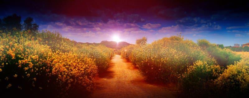 Πέτρινος δρόμος στο βουνό, μεταξύ των λουλουδιών στοκ φωτογραφία με δικαίωμα ελεύθερης χρήσης