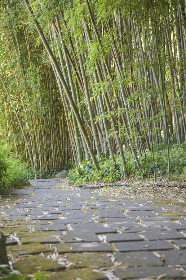Πέτρινος δρόμος σε ένα δάσος μπαμπού στοκ εικόνα με δικαίωμα ελεύθερης χρήσης