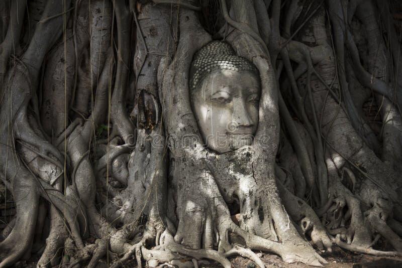Πέτρινο κεφάλι του Βούδα στις ρίζες δέντρων στοκ φωτογραφία