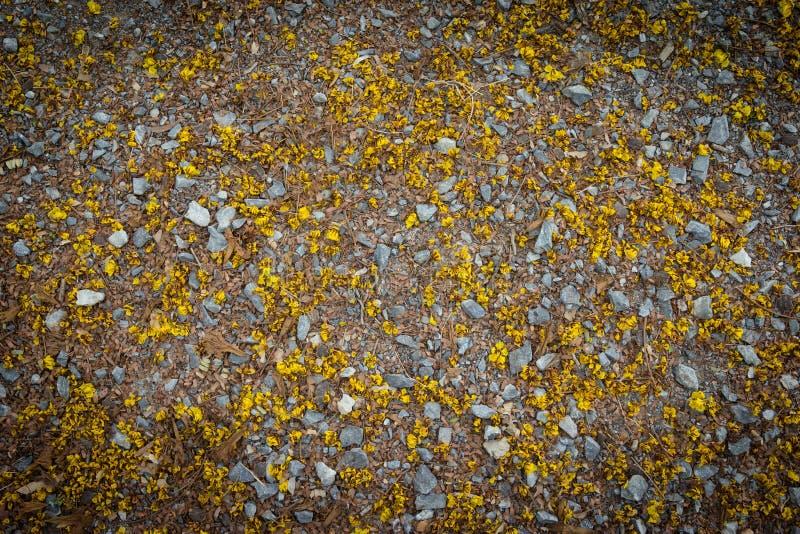 Πέτρινο πάτωμα με το κίτρινο λουλούδι, κίτρινο Poinciana στοκ εικόνες