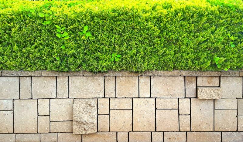 Πέτρινο υπόβαθρο τοίχων με τους πράσινους θάμνους στοκ φωτογραφίες με δικαίωμα ελεύθερης χρήσης