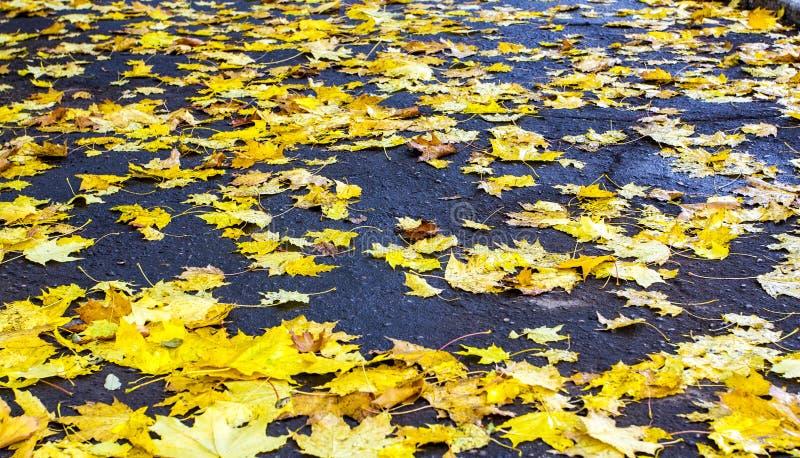 Πέφτω-κατεβάστε τα φύλλα φθινοπώρου στοκ φωτογραφίες