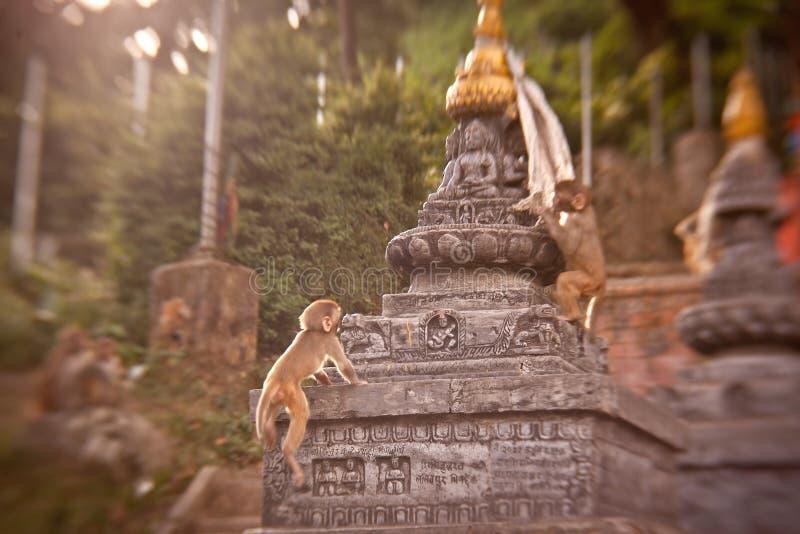 Πίθηκοι Macaque στο ναό πιθήκων Swayambhunath στοκ φωτογραφίες με δικαίωμα ελεύθερης χρήσης
