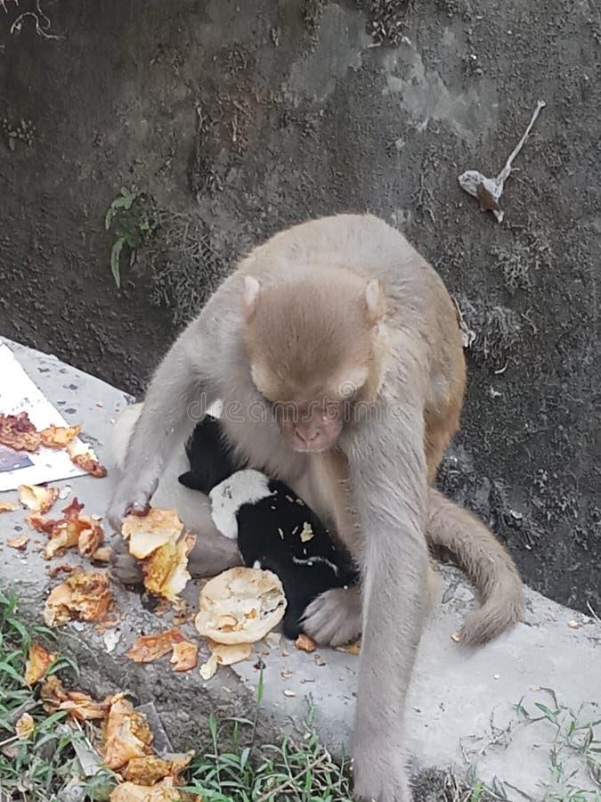 Πίθηκος και ένα κουτάβι στοκ φωτογραφία με δικαίωμα ελεύθερης χρήσης