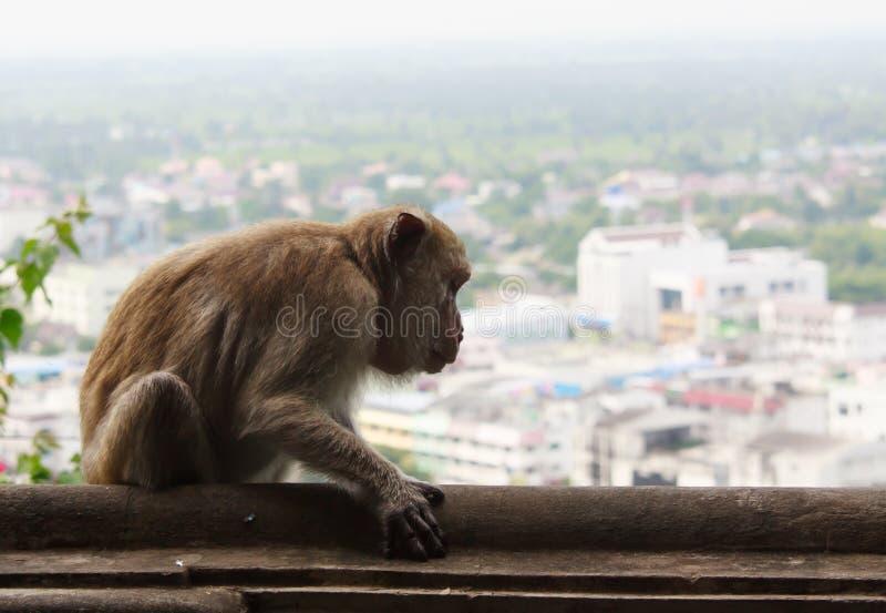 Πίθηκος με την άποψη πόλεων στοκ φωτογραφία με δικαίωμα ελεύθερης χρήσης