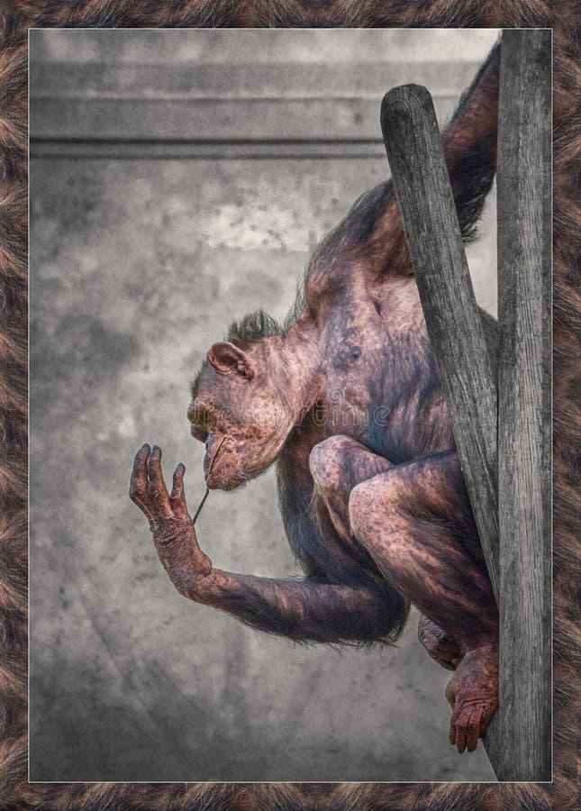 Πίθηκος που κρεμά γύρω στοκ εικόνα