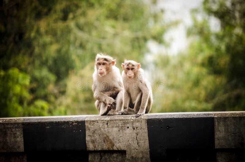 Πίθηκος σε Idukki στοκ φωτογραφία με δικαίωμα ελεύθερης χρήσης