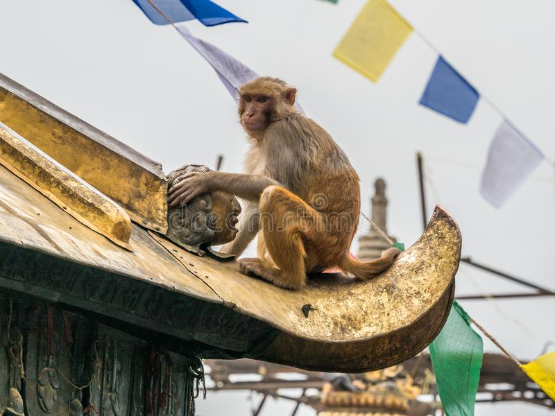 Πίθηκος στο στοιχείο αρχιτεκτονικής του βουδιστικού ναού στοκ φωτογραφίες