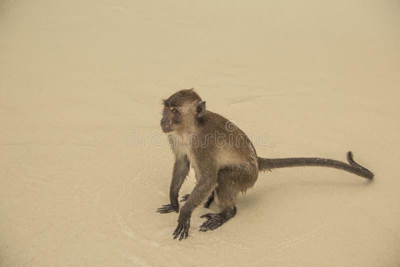 Πίθηκος στοκ εικόνα με δικαίωμα ελεύθερης χρήσης