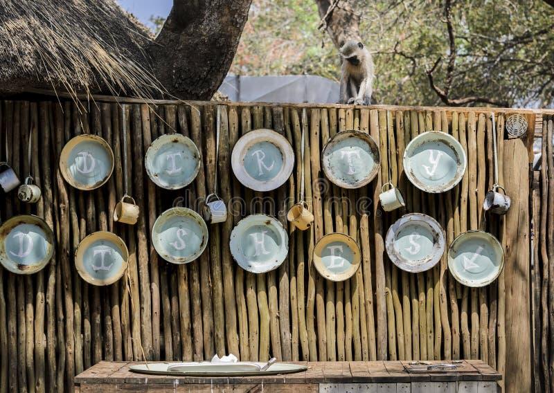 Πίθηκος Vervet που αγνοεί τα βρώμικα πιάτα που πλένουν την περιοχή στοκ φωτογραφία