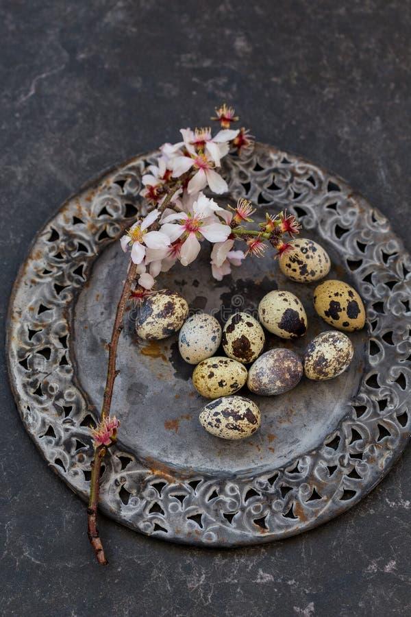 Πίνακας άνοιξη που θέτει με τον ανθίζοντας κλάδο αμυγδάλων και το αυγό ορτυκιών στοκ φωτογραφίες