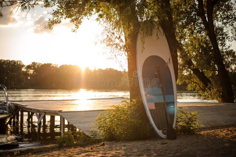 Πίνακας γουλιάς που στέκεται κοντά στο δέντρο στην όχθη της λίμνης στο ηλιοβασίλεμα στοκ φωτογραφία