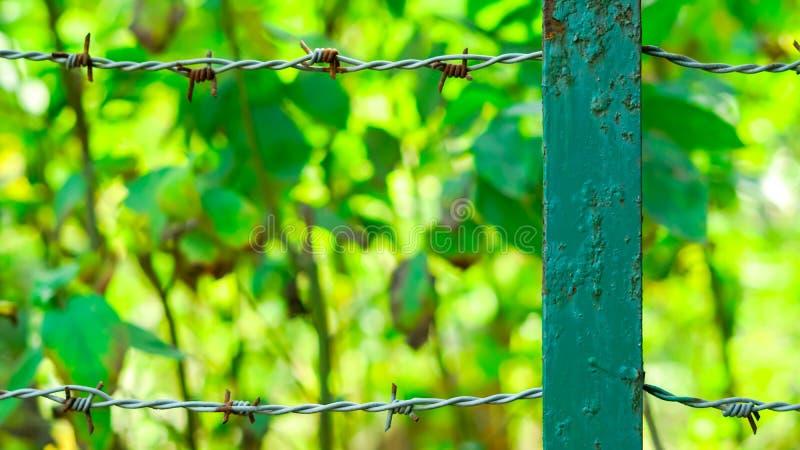 Πίσσα Kata με το πράσινο υπόβαθρο στοκ φωτογραφία με δικαίωμα ελεύθερης χρήσης