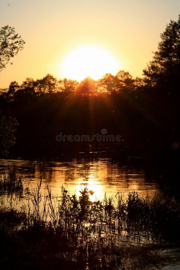 πίσω από τα μόνιμα δέντρα δύο θερινού ηλιοβασιλέματος πεύκων στοκ φωτογραφία με δικαίωμα ελεύθερης χρήσης