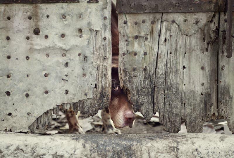πίσω από την πόρτα σκυλιών στοκ φωτογραφία με δικαίωμα ελεύθερης χρήσης