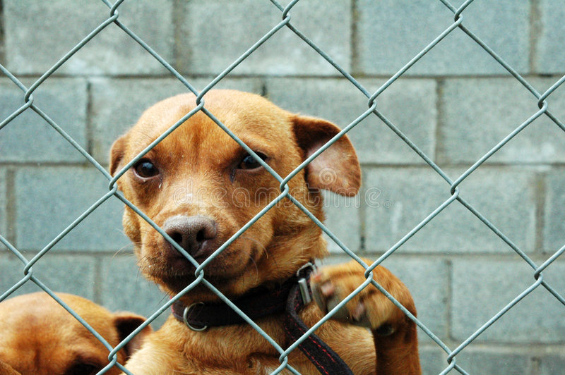 πίσω από τη φραγή σκυλιών στοκ εικόνες