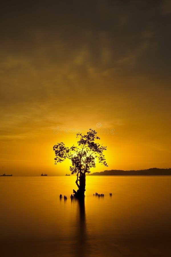 πίσω από το δέντρο ηλιοβασ&i στοκ φωτογραφίες με δικαίωμα ελεύθερης χρήσης