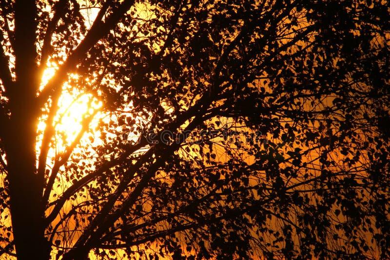 πίσω από το δέντρο ηλιοβασ&i στοκ εικόνα