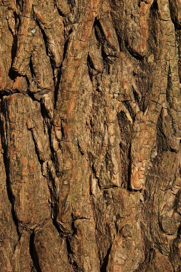 πίσω δέντρο σύστασης προτύπ&o στοκ εικόνες