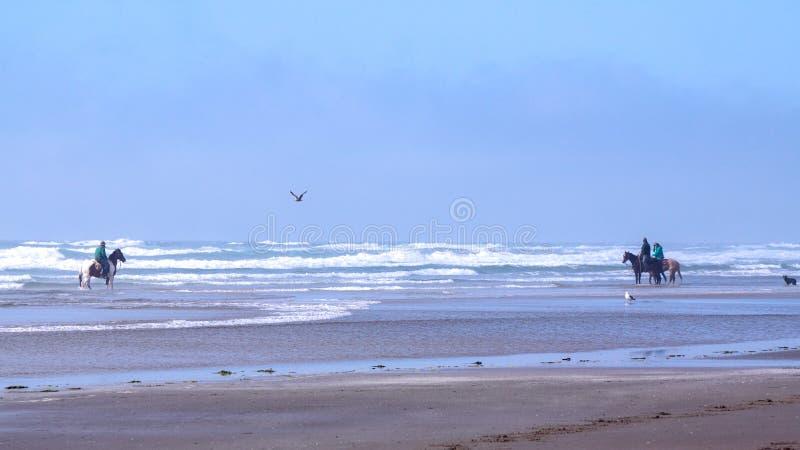 Πίσω οδήγηση αλόγων σε μια παραλία κοντά στο ακρωτήριο Meares, Όρεγκον στοκ φωτογραφία