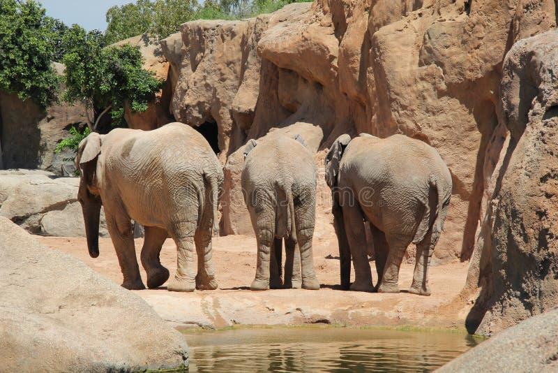 Πίσω πλευρά τριών elefants στοκ φωτογραφία με δικαίωμα ελεύθερης χρήσης