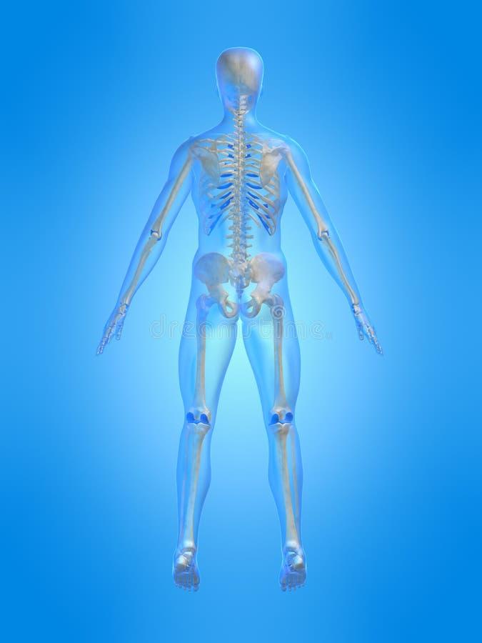 πίσω σκελετικός ελεύθερη απεικόνιση δικαιώματος