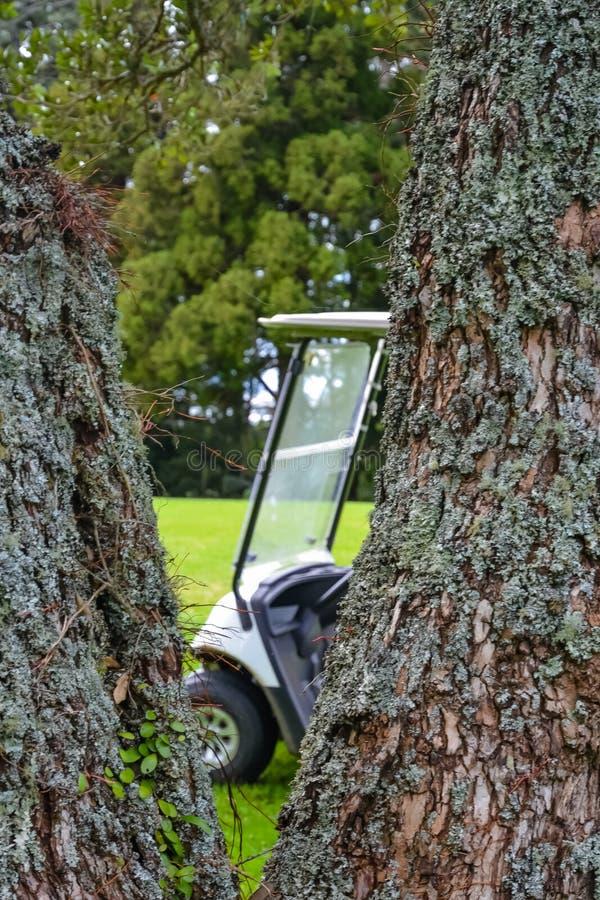 Παίκτες γκολφ Kart στο γήπεδο του γκολφ πίσω από το δέντρο στοκ φωτογραφίες