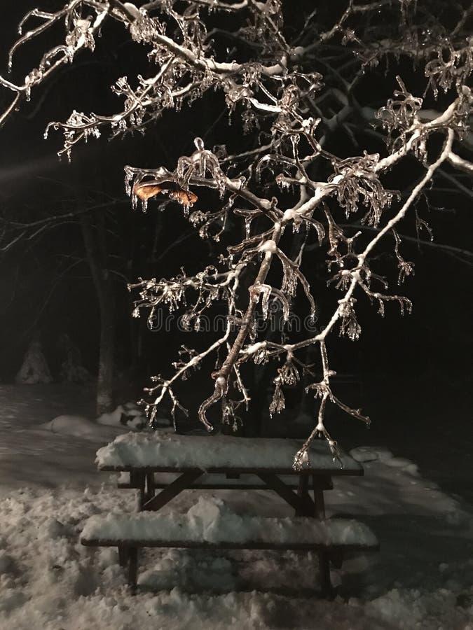 Παγάκια στο δέντρο επάνω από το χιονισμένο πάγκο πικ-νίκ τη νύχτα στοκ εικόνες