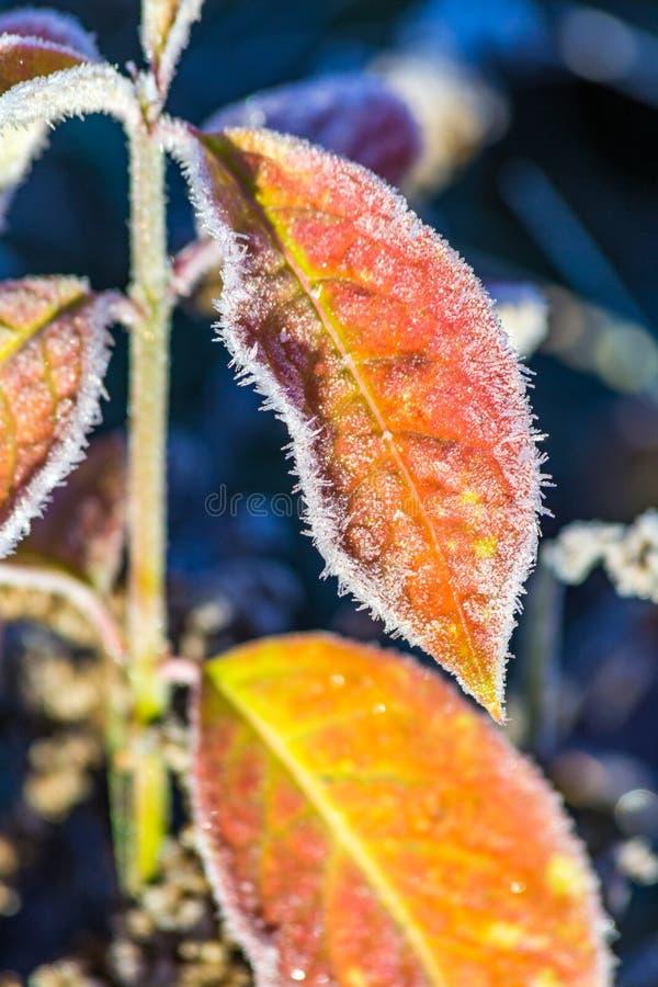 Παγετός πρωινού στοκ εικόνες με δικαίωμα ελεύθερης χρήσης