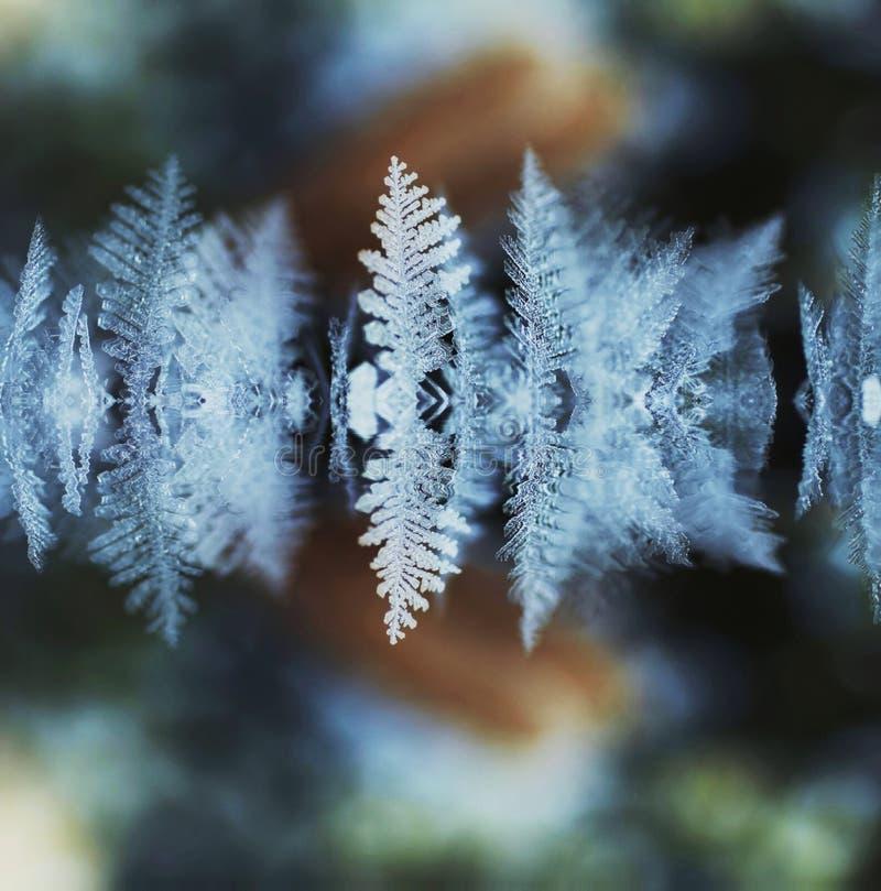 παγετός στοκ φωτογραφία