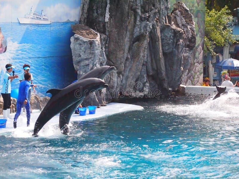 Παγκόσμιος ζωολογικός κήπος σαφάρι στοκ εικόνες με δικαίωμα ελεύθερης χρήσης