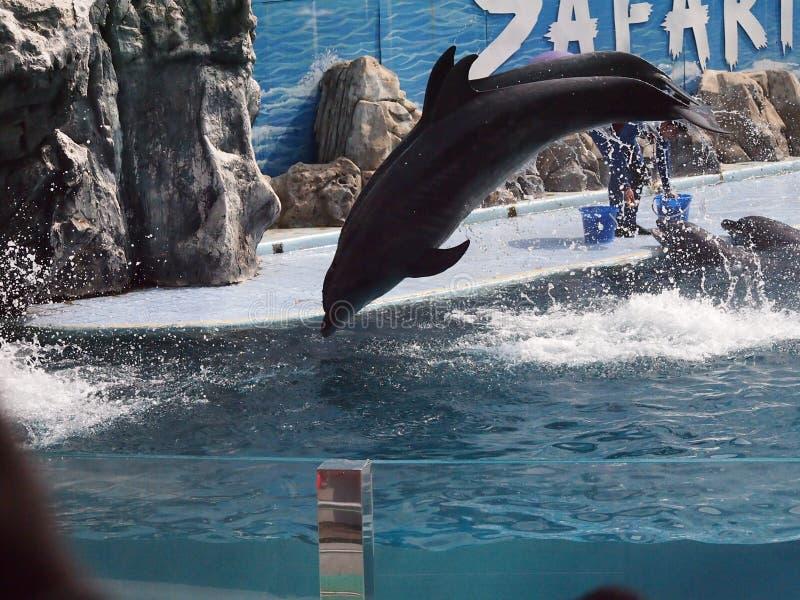 Παγκόσμιος ζωολογικός κήπος σαφάρι στοκ φωτογραφίες