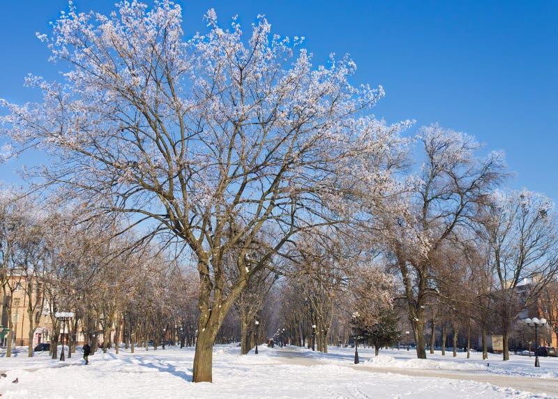 Παγωμένα δέντρα στην πόλη στην ηλιόλουστη χειμερινή ημέρα στοκ εικόνες με δικαίωμα ελεύθερης χρήσης