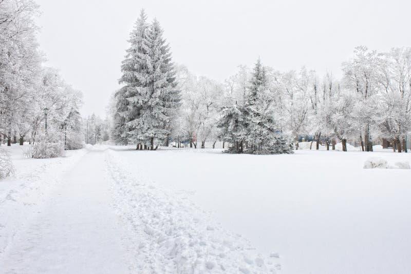 Παγωμένα δέντρα στην πόλη στην κρύα χειμερινή ημέρα στοκ εικόνα με δικαίωμα ελεύθερης χρήσης