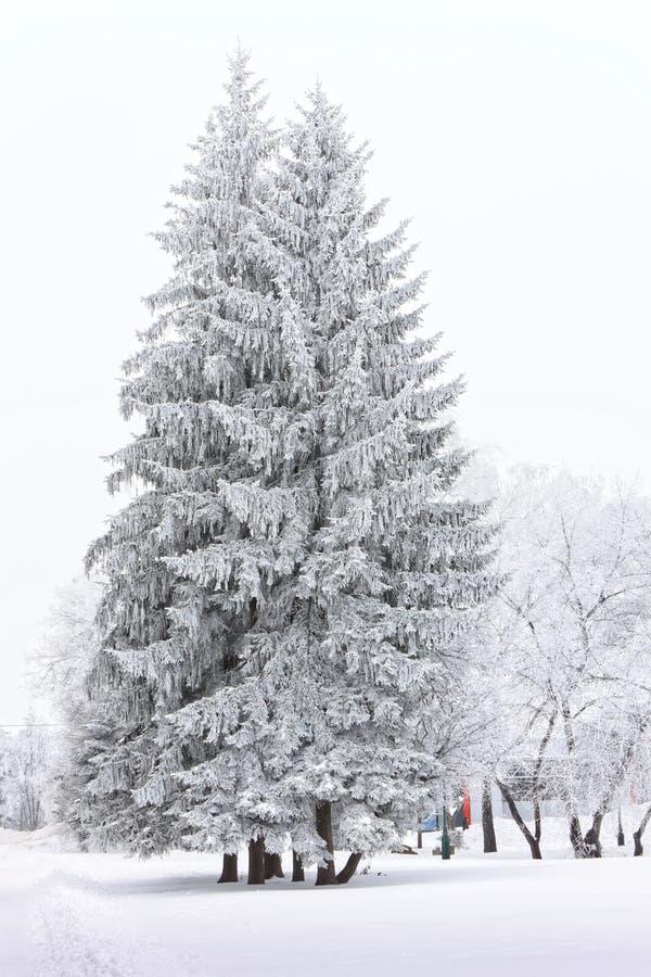 Παγωμένα δέντρα στην πόλη στην κρύα χειμερινή ημέρα στοκ εικόνες
