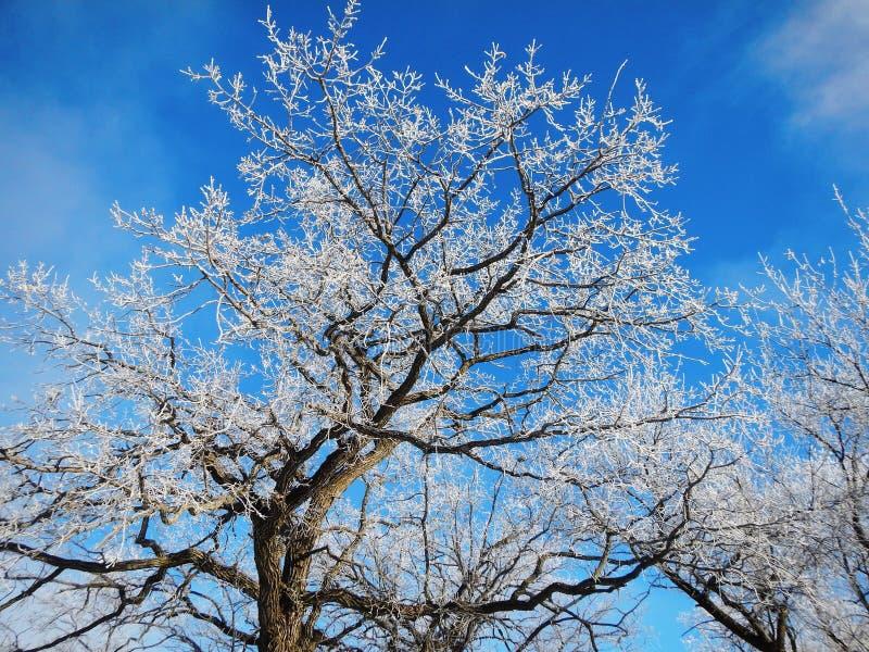 παγωμένα δέντρα στοκ εικόνες