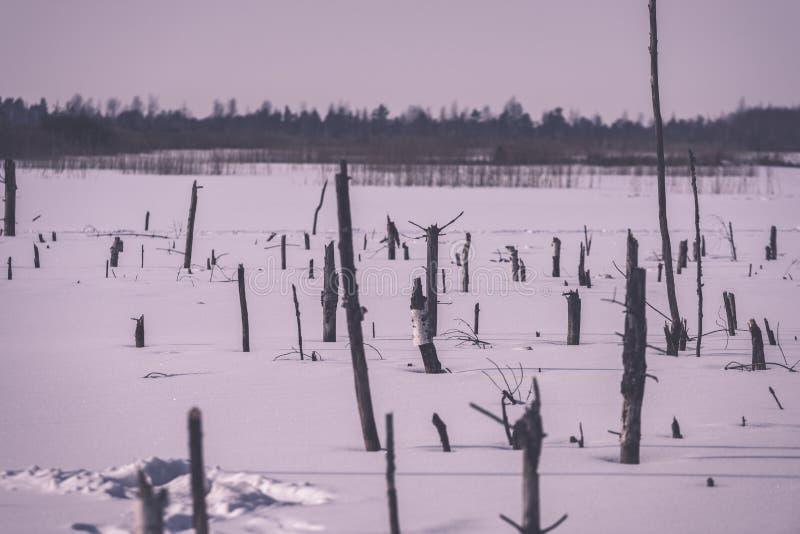 παγωμένα γυμνά ξηρά και νεκρά δασικά δέντρα στο χιονώδες τοπίο - vint στοκ εικόνα με δικαίωμα ελεύθερης χρήσης