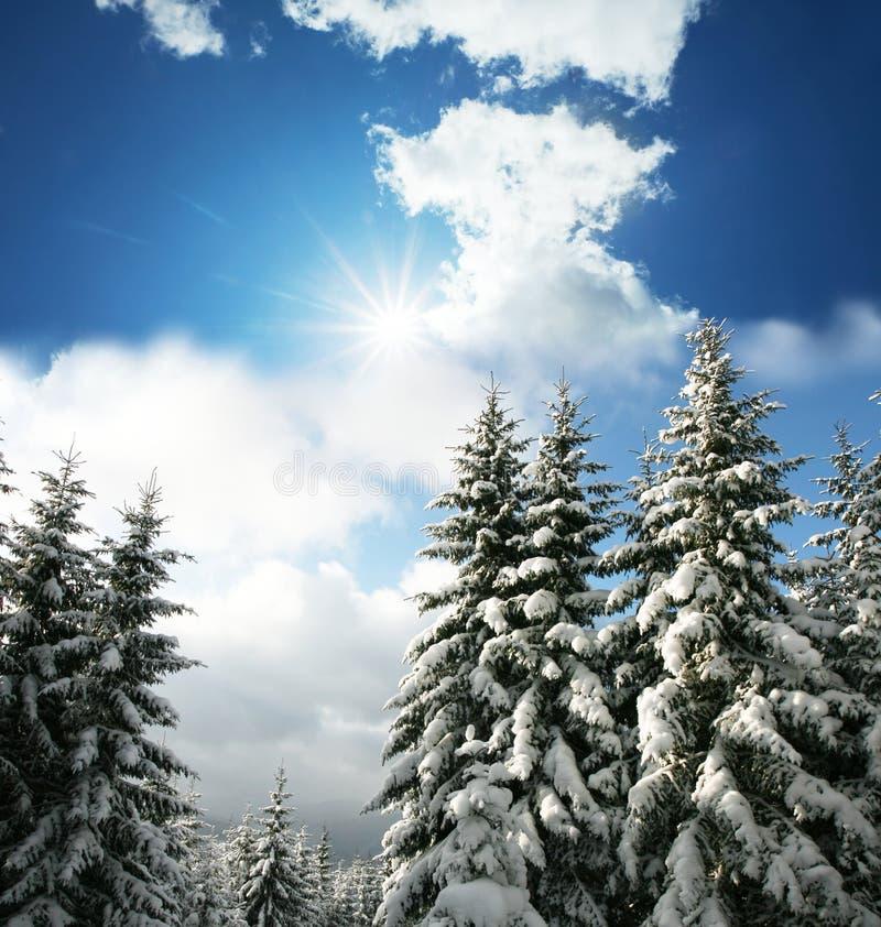 παγωμένα δέντρα στοκ εικόνα με δικαίωμα ελεύθερης χρήσης